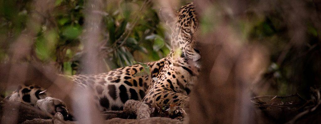 Travel to Northern Pantanal