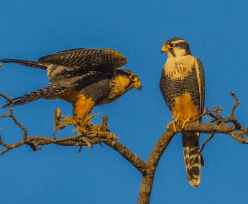 Vida Natural dos Pássaros