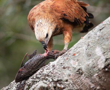 Pantanal Tour fotográfico