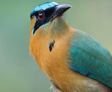 Pássaros Selvagens do Safari