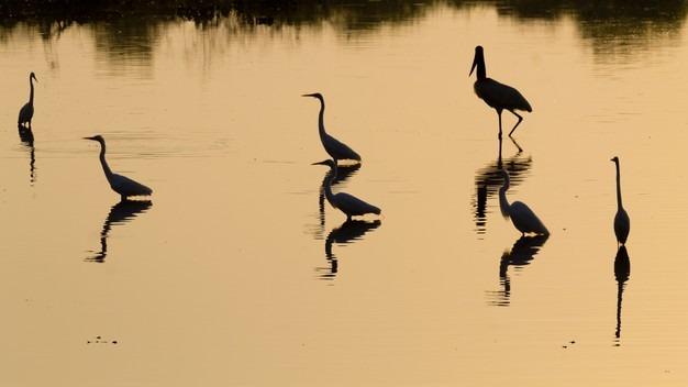 5 motivos porque você deveria conhecer o Mato Grosso