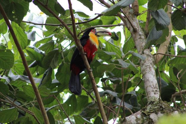 Como fazer uma viagem para o Pantanal de forma barata?