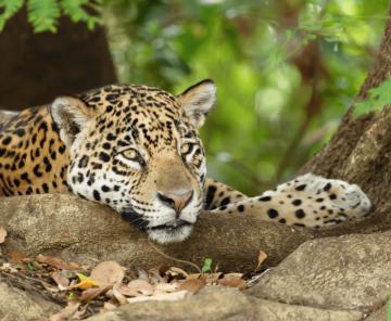 Pantanal nature wildlife tours