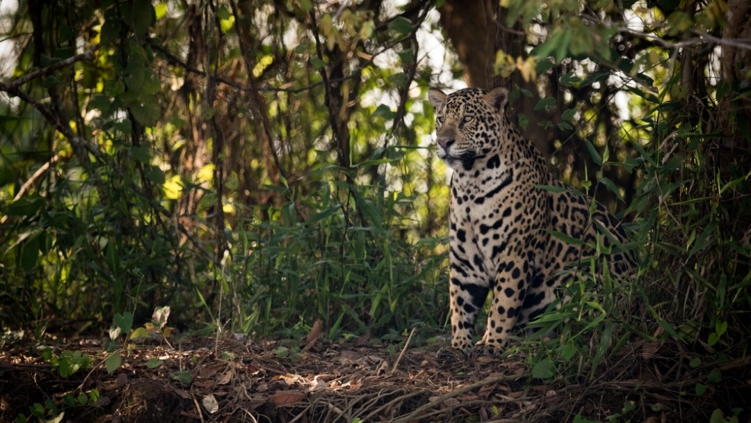 When to Travel to Northern Pantanal