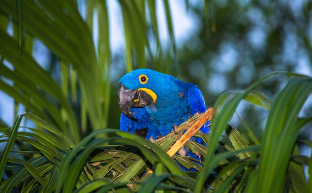 Plants of the Pantanal: meet the most incredible species